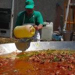 Feeding the 300 - Giant Paella